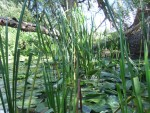 on my wood-hunts i came across an impassible stream full of water lilies - it bounded the site on two sides