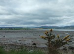 I cycled along the Cromarty Firth to Cromarty only to find the ferry wasn't running, so back I had to go, the long way round and what was worse, into the wind.
