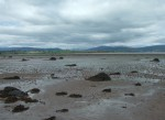 I think these were just rocks covered in seaweed but they seemed a bit incongruous in the mud flats