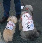 pets-against-war