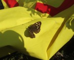 a Speckled Wood butterfly on a banner