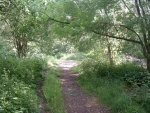 17. in the cutting near footpath crossing