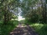 4. the trackbed leading south towards Vivary Way