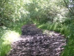 5. looking south - mud patch on trackbed