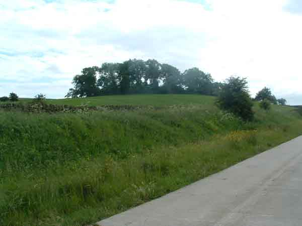 8. looking south from the farm road