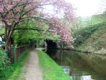 blossom on the canal